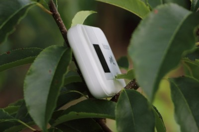 Pocket Hotspot 4G Arbre